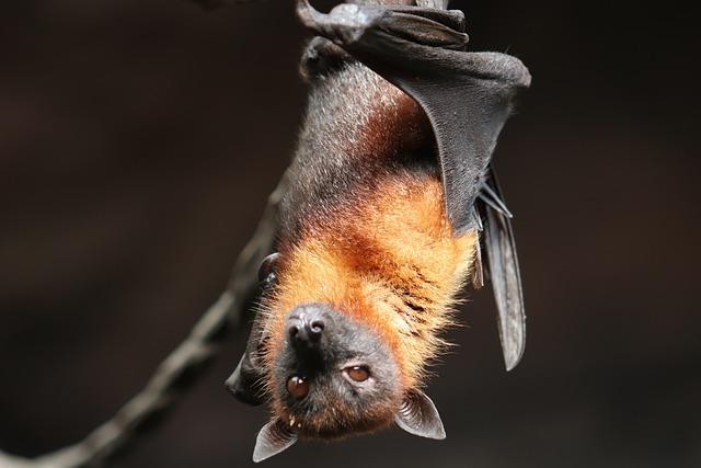 netopýr na větvičce